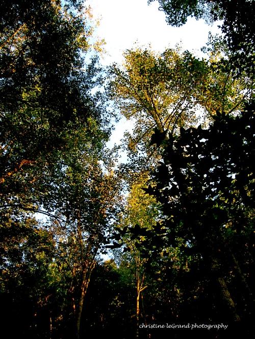 treesharpwater